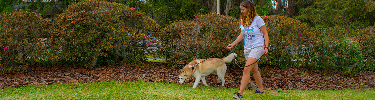 4dog_walk_gainesville